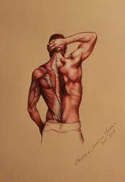 anatomical study sketch back - EUM